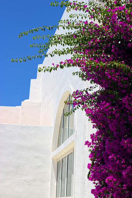Nomikos Bougainvillea